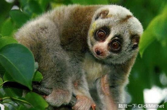 世界最可爱的动物top20
