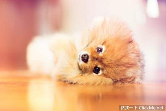 超可爱宠物小明星