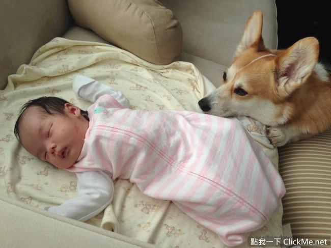 宝宝生气图片动物