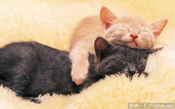 看看这些睡觉的动物们可爱又美丽的图像