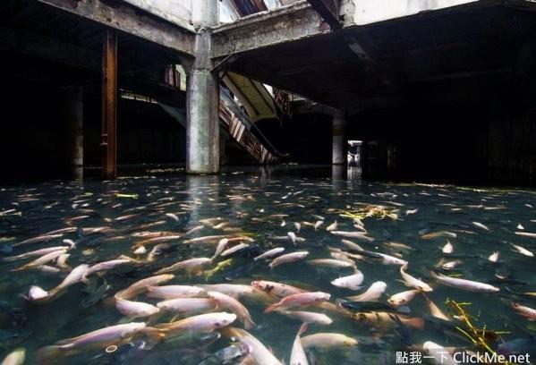 当人类离开这些废弃之地,这才是大自然收回地球的方法!