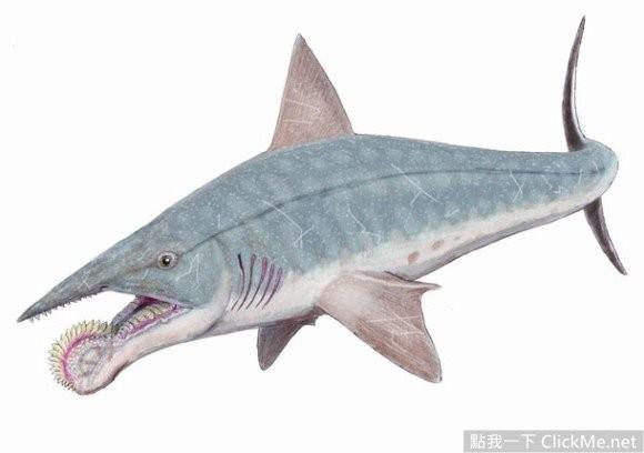 16种来自外星的深海怪鲨!不要怀疑这绝不是合成照!