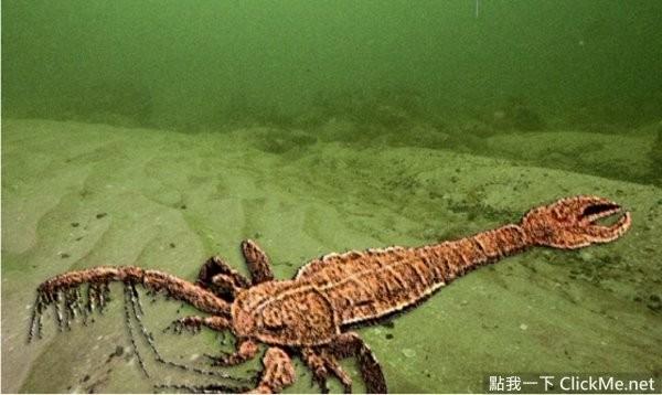 动物 蜥 蜥蜴 600
